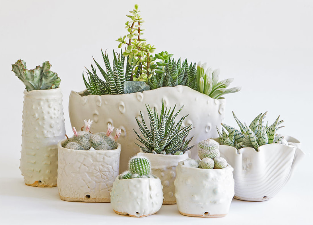 Artist made and grown succulent and cacti arrangements and planters